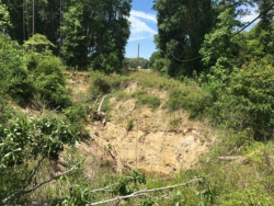Active Sinkhole Between Pilgrims Pride and Falmouth Springs Just off HWY 90 where Sabal Trail plans to bore under hwy and cross Falmouth Cathedral Cave system